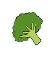 broccoli vegetable fresh farm healthy food vector image