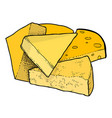 cartoon image of cheese vector image vector image