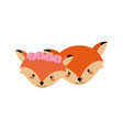 cute fox head animal couple together vector image