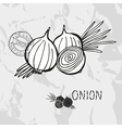 Hand drawn whole and sliced onions vector image