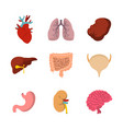 human internal organ icon set flat style vector image