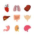 human internal organ icon set flat style vector image vector image