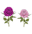 two hand drawn pink and purple rose flowers vector image vector image