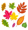 colorful autumn leaves set fall leaf collection vector image vector image