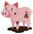 cute pig in muddy puddle vector image