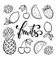 fruit symbols doodle outline drawing tropical vector image vector image