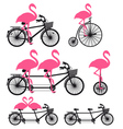 flamingos on bicycle set vector image