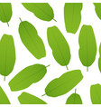 banana leaves seamless pattern vector image