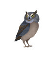 owl with yellow eyes and blue-brown plumage wild vector image