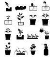 Plant growing icons set vector image vector image