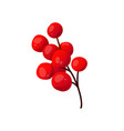rowan branch with berries isolated on white vector image