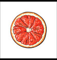 top view round slice half of ripe grapefruit red vector image