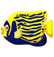 Angelfish cartoon vector image vector image