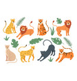 feline cats jungle family isolated set vector image vector image