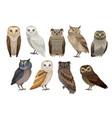 flat set of different species of owls wild vector image