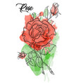 hand drawn rose etch style roses and leaves at vector image