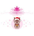 puppy yorkshire terrier dog in santa claus hat vector image vector image
