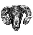 ram head drawing line work vector image vector image
