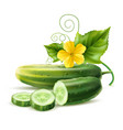 realistic cucumber green haulm leaf flower vector image vector image