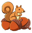 squirrel with acorns on white background vector image