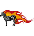 animal of zebra with flames vector image