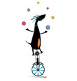 dog rides on unicycle and juggles the balls vector image