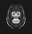 gorilla face on dark backdrop vector image