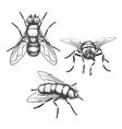 Hand drawn flies vector image