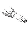 hand with palm facing down vintage engraving vector image vector image