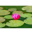 Low poly lily on the pond vector image
