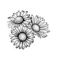 beautiful monochrome black and white daisy vector image