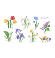 bundle of natural drawings of spring flowers vector image vector image
