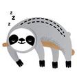 cute sleeping sloth bear animal vector image vector image