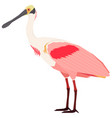 roseate spoonbill bird isolated vector image vector image