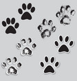 Animal cat paw track feet print icons with shadow vector image