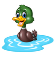 Cartoon duck floats on water vector image vector image