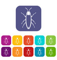 Cockroach icons set