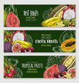 exotic tropical fruit blackboard banner set vector image vector image