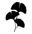 ginkgo biloba branch with leaf silhouette vector image vector image