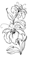 Lily flower vector image vector image