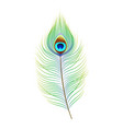 peacock feather realistic vector image vector image
