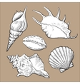Set of various beautiful mollusk sea shells vector image vector image