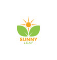 sunny leaf graphic design template vector image vector image