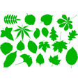 tree leaves set vector image