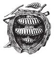 wasp vintage vector image