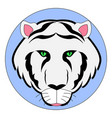 white siberian tiger on white background vector image vector image
