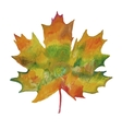 maple leaf painted in watercolor vector image