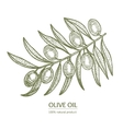 Olive Branch Hand Draw Sketch vector image