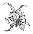 five petals on a stem vector image vector image