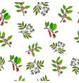 hand drawn berries plants seamless pattern vector image vector image